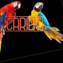 LLEGA CARIBE SOCIAL, EL PRIMER MUSEO POP CARIBEÑO EN PUERTO RICO