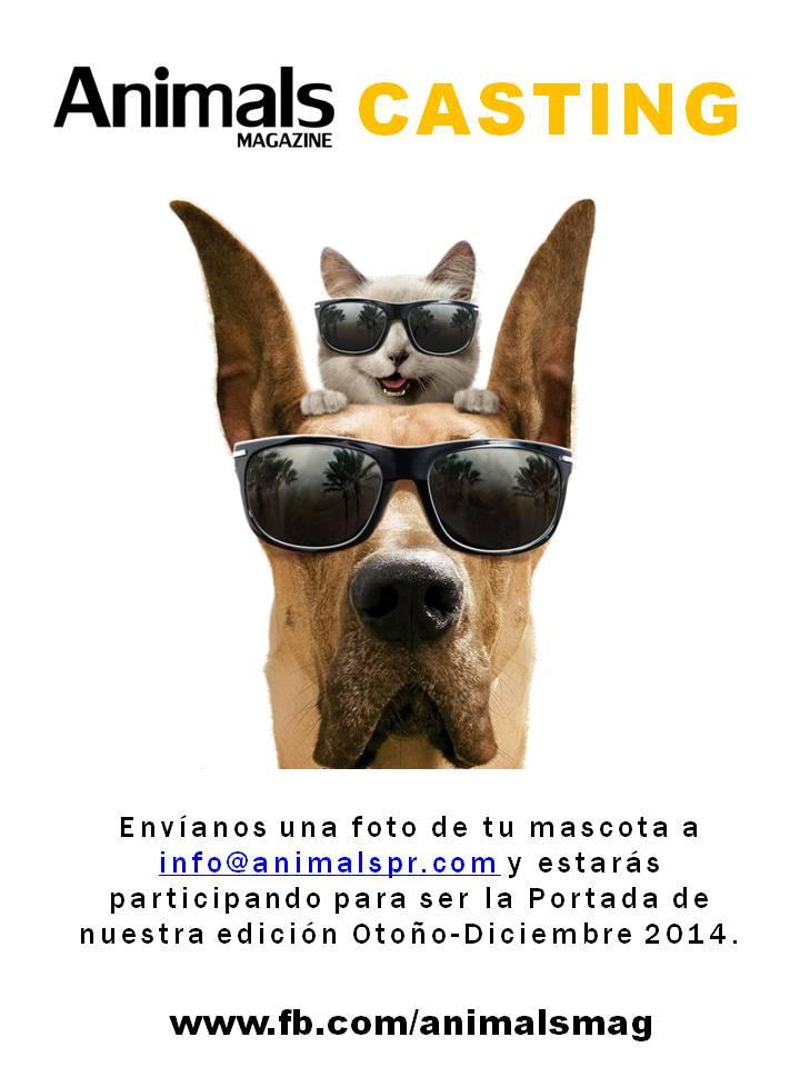 Animals Magazine busca la mascota más adorable de Puerto Rico